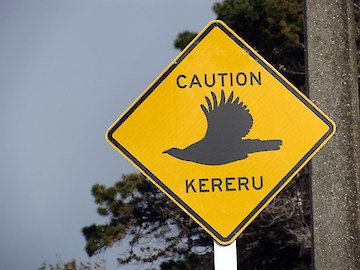 Caution Kereru - road sign designed for Otatara Landcare Group by Janet Hodgetts