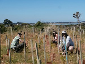 SIT Students Darren, Ange and Lee helping cover plants at Bushy Point
